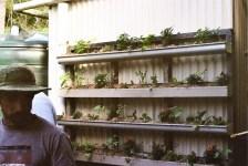 Urban Permaculture workshop vertical garden