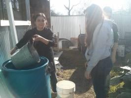 diana rainwater project