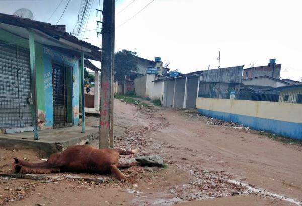 Gravatá: cavalo se encosta em poste e morre eletrocutado no bairro Maria Auxiliadora