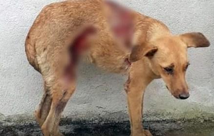 Mulher joga soda cáustica em cadela; internautas ficam furiosos