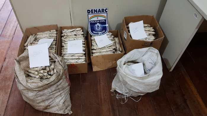 Homem preso com 890 bananas de dinamites em Pernambuco; material renderia R$ 267 mil