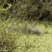 Agricultor morto a facadas no Sítio Malhada em Arcoverde