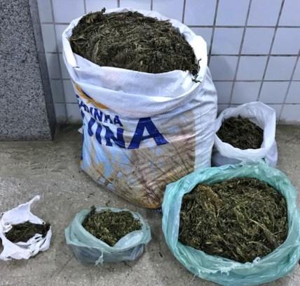 Ação da Polícia Militar apreende mais drogas em Floresta