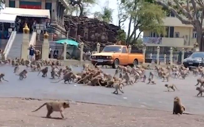 Macacos invadem ruas da Tailândia por conta da isolamento social