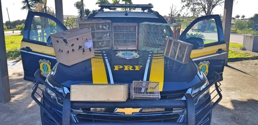 Homem é detido com 36 pássaros silvestres na BR 232, em Pombos