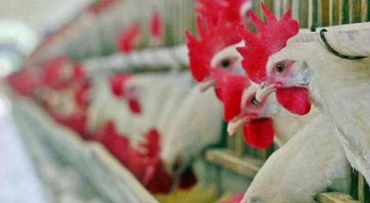 China encontra coronavírus em carne de frango importada do Brasil