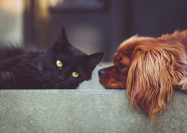 Pessoas com coronavírus podem transmitir vírus para cães e gatos