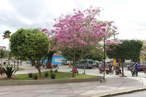 Primavera começa oficialmente hoje; calor e floração das árvores