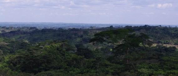 Afrykański gąszcz widziany z drogi do Luebo. Z rzeki perspektywa była inna. (Fot. www.afrykanowaka.pl)