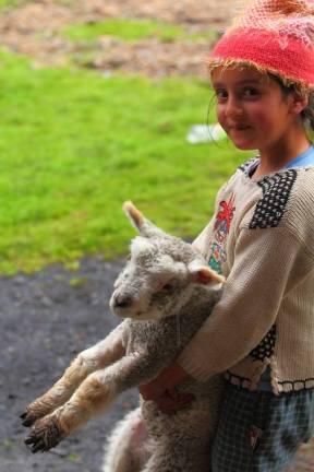 Park Narodowy El Cocuy w Kolumbii. Dziecko bawi się z owcą