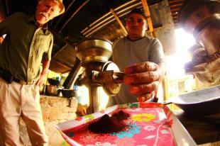 Plantacja kolumbijskiej kawy w okolicy Salento