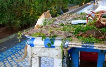 Maroko jest pełne kotów