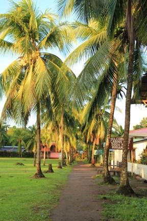 Palmy w Tortugero na Kostaryce