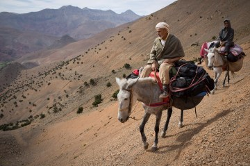 Wędrówka na ośle w Maroku