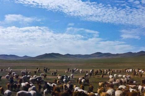 Mongoliskie stepy