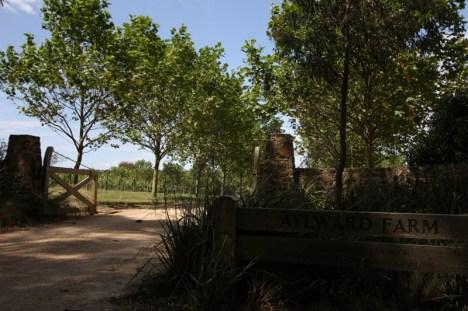 Śladami winnic w Australii