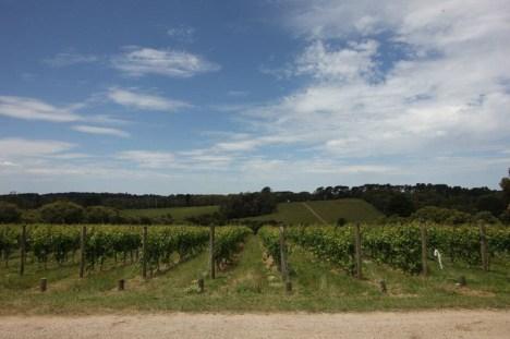 Australijskie winnice