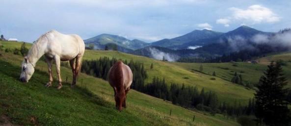 Konie w ukraińskich górach