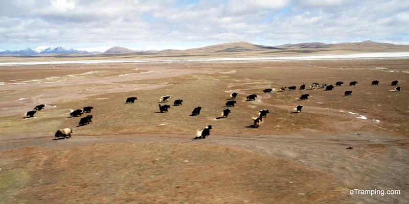 Podróż pociągiem przez Chiny. W drodze do Tybetu
