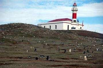 Wyspa Isal Magdalena w Patagonii