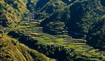 Filipiny - pola ryżowe w górach