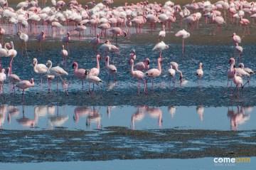 Zdjęcia z Afryki. Flamingii w Namibii