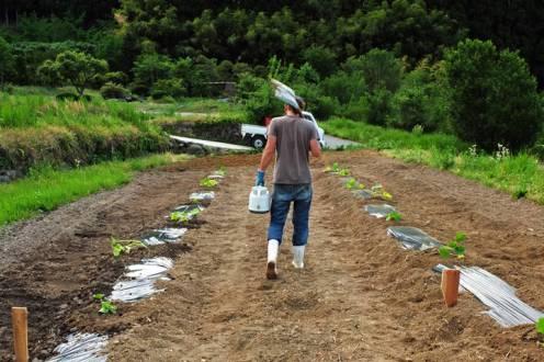 Japonia_Hoshina_farm