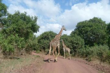 Dziki afrykańskie zwierzęta