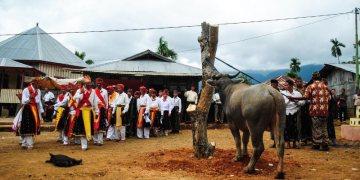 Bawół ofiarny - podróż przez Indonezję
