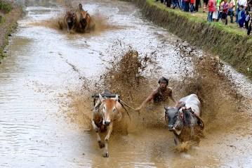 Wyścig w błocie na Sumatrze