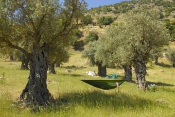 Gaj oliwny w Jordanii, śpimy w hamakach
