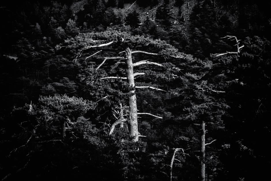 Kikut drzewa na szlaku. (Fot. Jakub Rybicki)