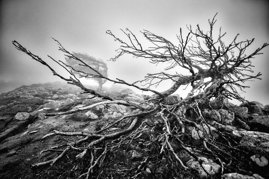 Samotne drzewo na szlaku. (Fot. Jakub Rybicki)