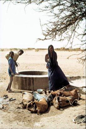 Rowerem przez Niger - zdjęcia Jacka Herman-Izyckiego
