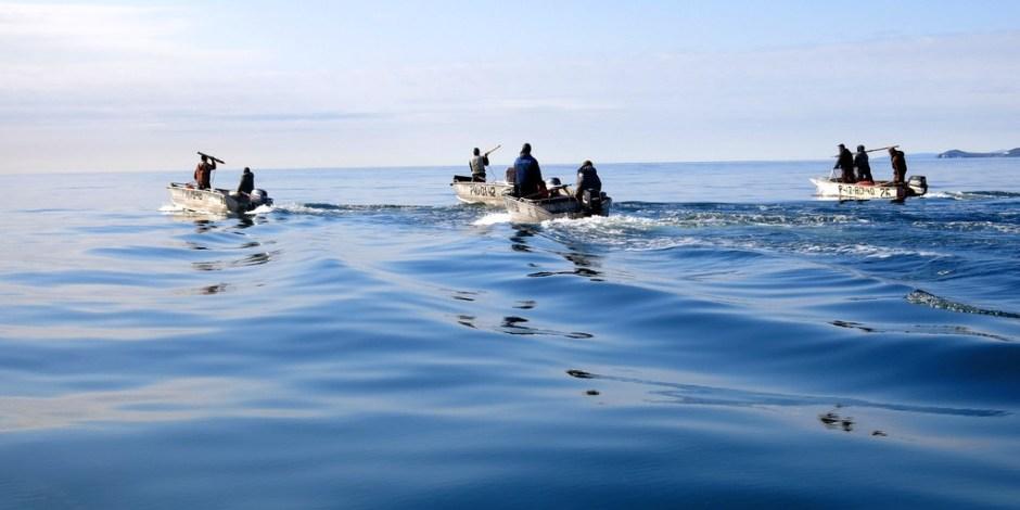Polowanie na wieloryby w Rosji