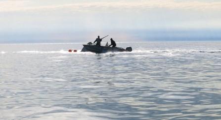 Trzeci harpun trafia wieloryba
