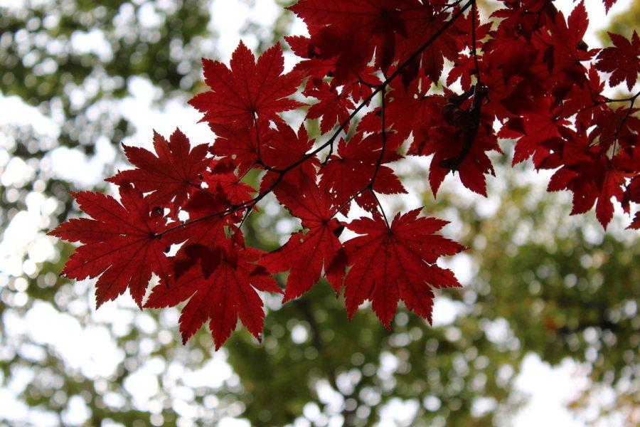 Korea Południowa, jesień w parku narodowym