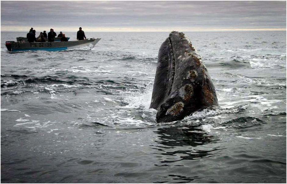 Polowanie na wieloryby u wybrzeży Czukotki