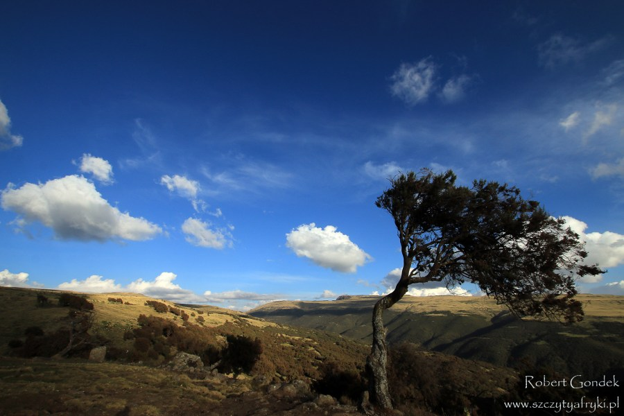 Góry Semien w Etiopii - Robert Gondek