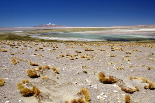 Chile, Atacama, Salar de Tara - foto