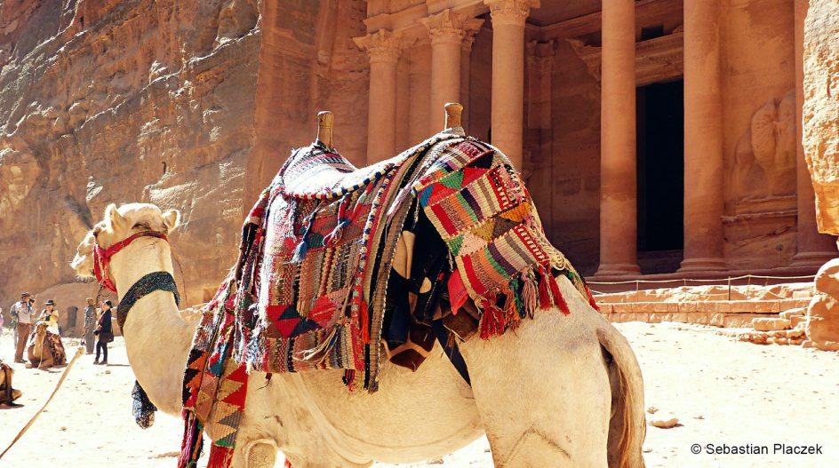 Jordania, Petra, wielbłąd do przewożenia turystów