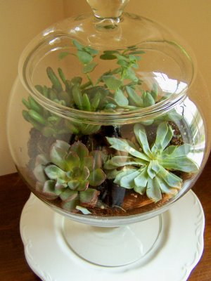 10 Ideas For Decorating With Apothecary Jars Perpetually