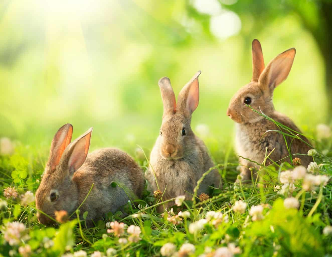 Bunny Preschool Lesson Plans
