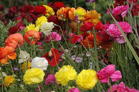 botanic_garden29