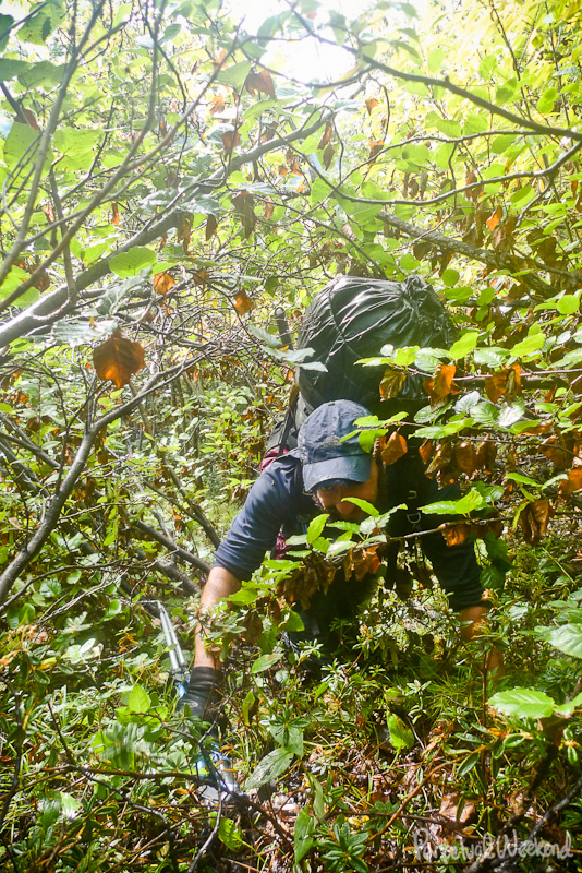 alaska thrash, bushwack, rain, backpacking
