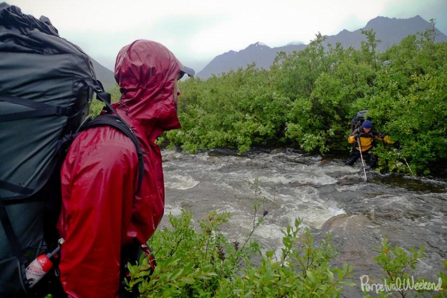 alder bushwacking in alaska on a wet, rainy day