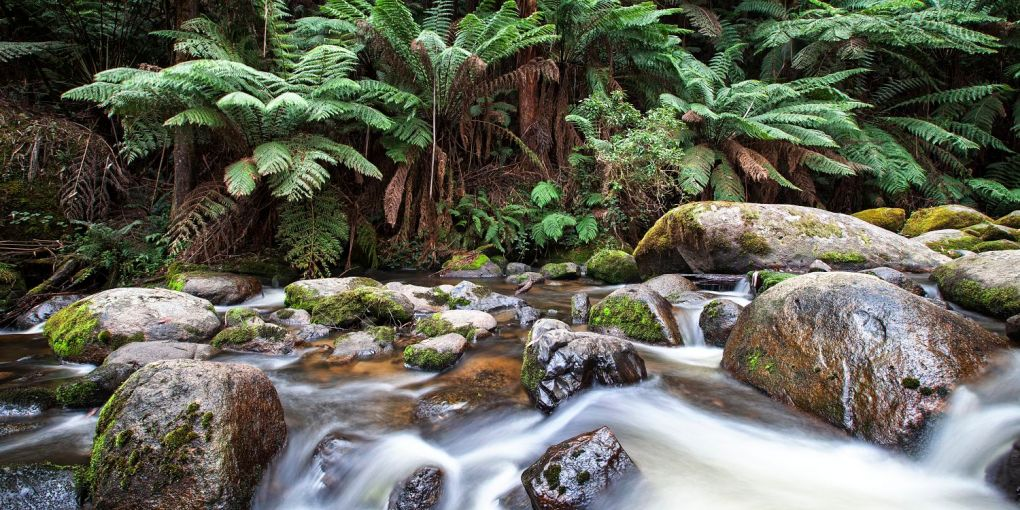 Toorongo National Park Melbourne Landcape Photography
