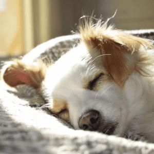 perros sueño dormir