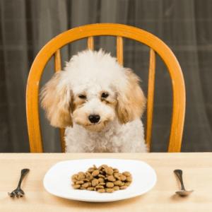 Siete alimentos que son malos para tu perro