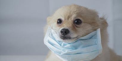 coronavirus-canino